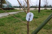 天山桜の会植樹の写真